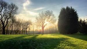 Rasen Düngen Bei Sonne : kostenlose foto landschaft baum natur wald gras licht sonnenschein sonne ~ Indierocktalk.com Haus und Dekorationen