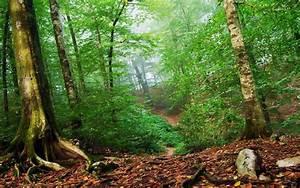 Forest Undergrowth Wallpaper