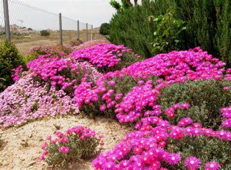 Pflanzen Für Mediterranen Garten by Mediterrane Pflanzen F 252 R Den Garten Garten Haus