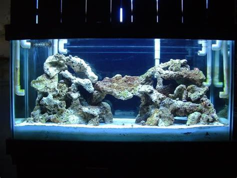 Live Rock Aquascape Designs by 55 Gallon Live Rock Aquascape Let Me See Your 120 Gallon