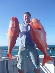 Ruby Snapper Deep Drop | Fishing - Fishwrecked.com ...