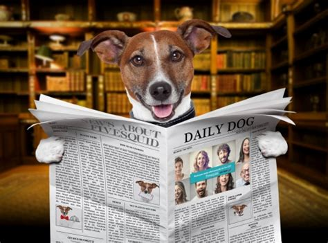 cute dog hold newspaper   logo  website