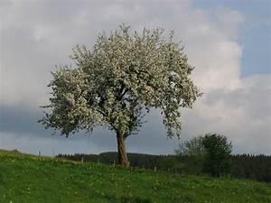 Keltisches Horoskop Berechnen : apfelbaum baumhoroskop 4you ~ Themetempest.com Abrechnung