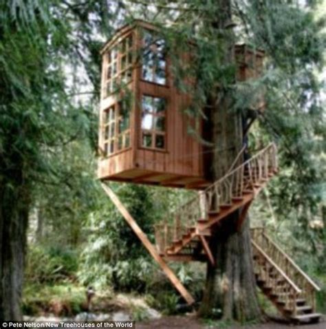 douglas fir trees for sale now that 39 s a tree house startling pictures of homes in