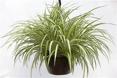 Spider Hanging Plant Basket