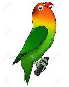 lovebird vector  illustration   bird art bird