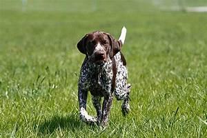Mietwohnung Mit Hund : dem hund nein beibringen so funktioniert es ~ Lizthompson.info Haus und Dekorationen
