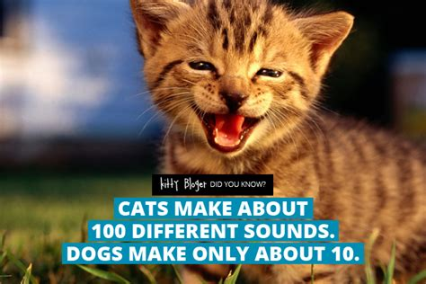 facts about cats did you 10 amazing facts about cats 2 kitty bloger