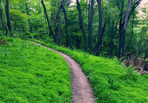 Scenic Trails and Riverfront Paths: Pittsburgh's Best Runs