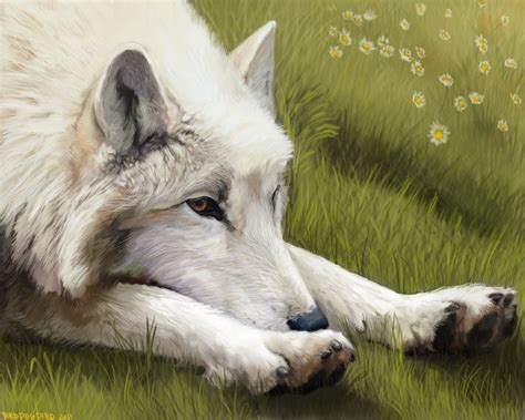 white wolf lounging by wylieblais on deviantart