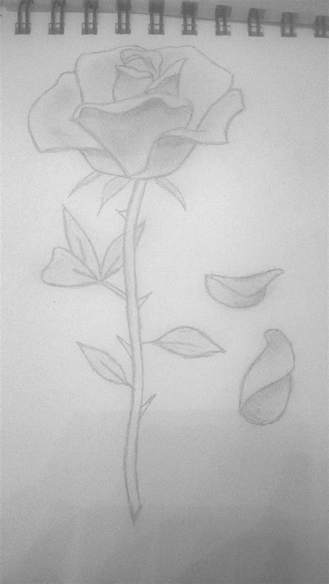 rose petals falling | Rose petals falling, Rose sketch