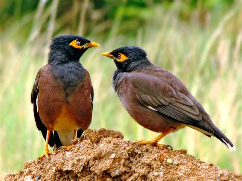 common garden birds of india part ii greenmylife