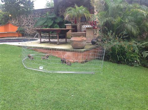 perros cachorros corral altura jaula paneles 70cm mt pen dog play 75cm caracteristicas