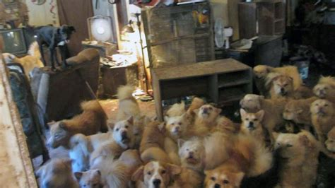 lawmaker targets animal hoarding