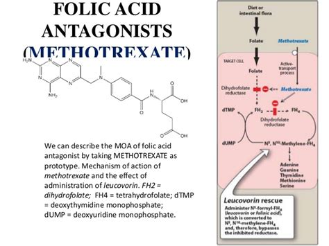 Antimetabolitesused In Anticancer Therapy , Submitted By