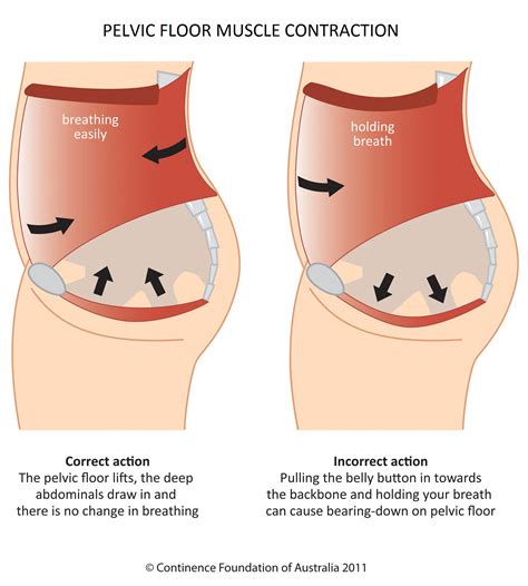 muscles of the pelvic floor pelvic floor in s outs gfit