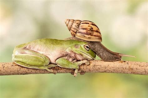 frong & snail | Frog, Leap frog, Animals