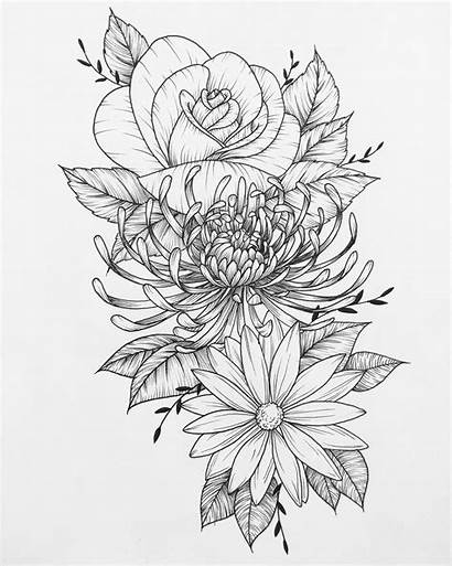 Tattoo Flower Sketch Daisy Chrysanthemum Drawings Sketches