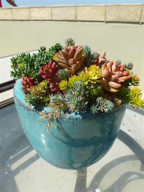 indoor tree succulent pot botanica lanscape inc put it in a pot