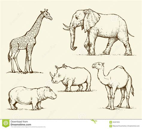 african animals vector drawing stock vector