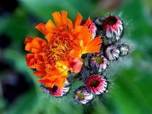 Welche Blumen Blühen Im Mai : welche blumen im juli pflanzen ostseesuche com ~ Eleganceandgraceweddings.com Haus und Dekorationen