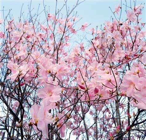 bloemen achtergronden animaatjesnl