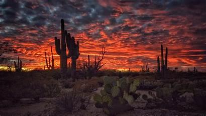 Arizona Desert Cactus Tucson Sunset Desktop Wallpapers