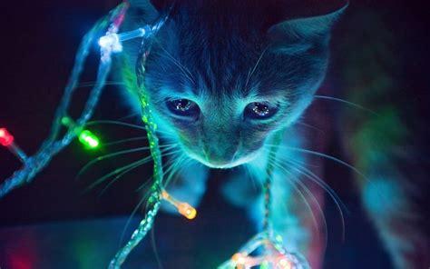 Bright Animal Wallpaper - cat neon lights macro animals lights
