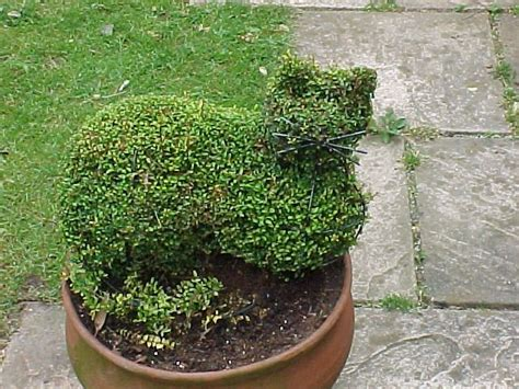 Tips On Creating An Outdoor Topiary