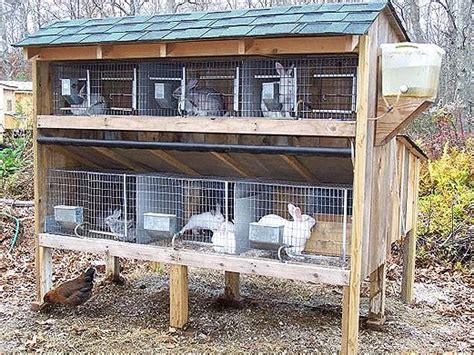 costruire gabbia coniglio come costruire una gabbia per conigli fai da te