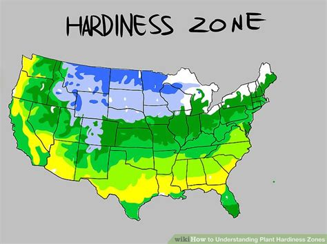 How To Understanding Plant Hardiness Zones 9 Steps
