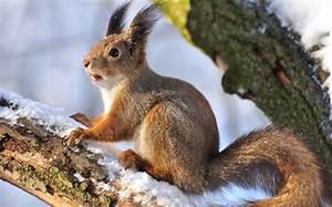 Halten Maulwürfe Winterschlaf : bild 6 tiere im winterschlaf eichh rnchen sind dick ~ Lizthompson.info Haus und Dekorationen