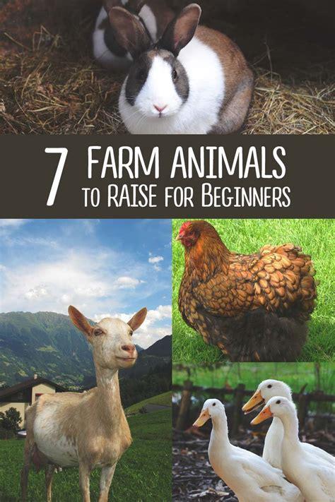 farm animals raise