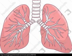 de dibujos animados de pulmón humano Stockphoto #9067168 Agencia de stock PantherMedia
