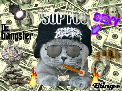 Gangster Cat? Picture #109955688 Blingeecom