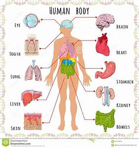 Parts Of The Human Body Clipart 20 Free Cliparts