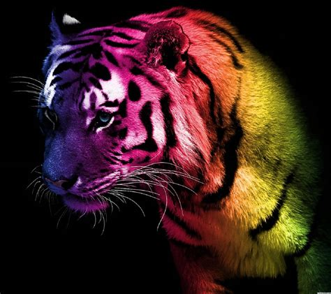 Rainbow Animal Wallpaper - rainbow tiger wallpaper by isaifyaly 6c free on zedge