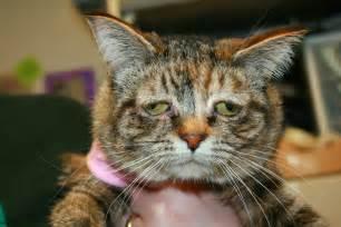 world s cat world s saddest cat tucker needs to be adopted