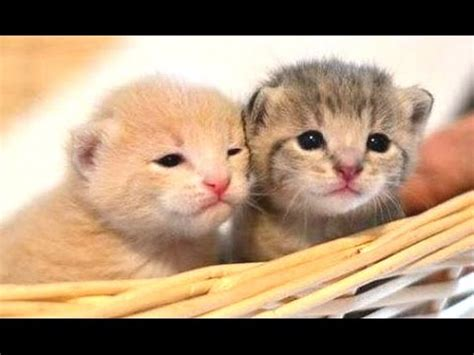 cute kittens compilation life  cats