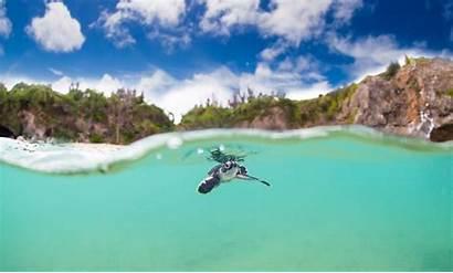 Turtle Turtles Sea Swimming Wallpapers Okinawa Cutest