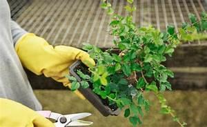 Bonsai Pflege Für Anfänger : bonsai richtig schneiden mein sch ner garten ~ Frokenaadalensverden.com Haus und Dekorationen