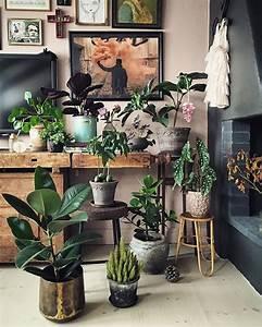 die 352 besten bilder zu wohnen mit pflanzen auf pinterest With katzennetz balkon mit green garden plants