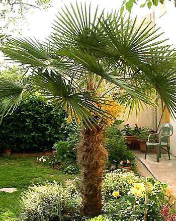 newsletter p 233 pini 232 re plantes jardinerie achat en ligne