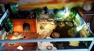 Kann Man Haus Kaufen Ohne Eigenkapital : terrarien f r landschildkr ten schildkr ten terrarium ~ Michelbontemps.com Haus und Dekorationen
