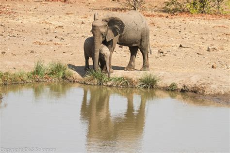 how can an elephant get video adorable baby elephant just can t get a grip africa geographic