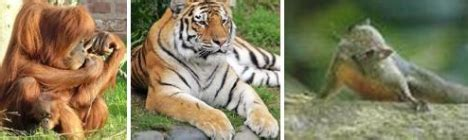 fauna indonesia barat blog guru geografi man  gunungkidul
