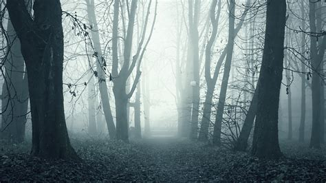Depressing Home Screen Wallpaper Creepy by Trees Fog Mist Alley Park Forest Wallpaper 38851