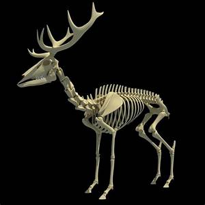 animal skeletons - Google Search | Monster Creation ...