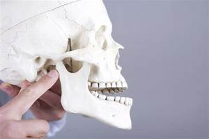 The Temporomandibular Joint  Tmj