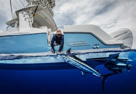 Ocean Fishing Boat Types by Types Of Boats Boston Whaler